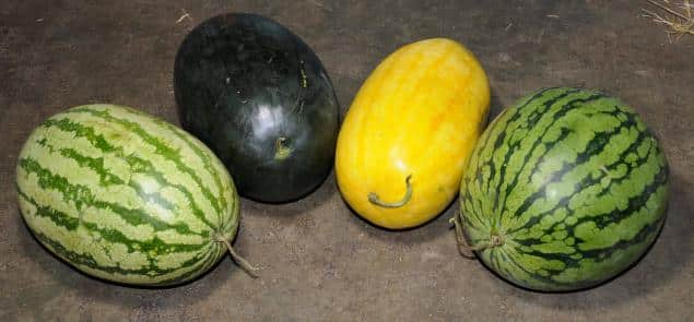 Different Types of Watermelon