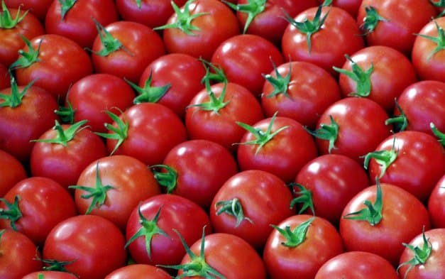 Graded Tomatoes