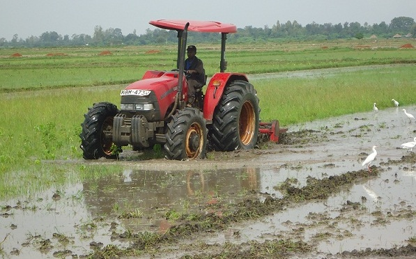 Preparation of Land in Rice Farming