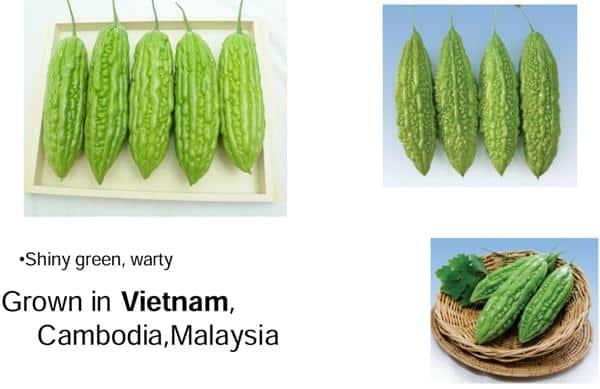 Vietnam type bitter gourd