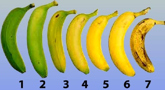 Banana Ripening Stages