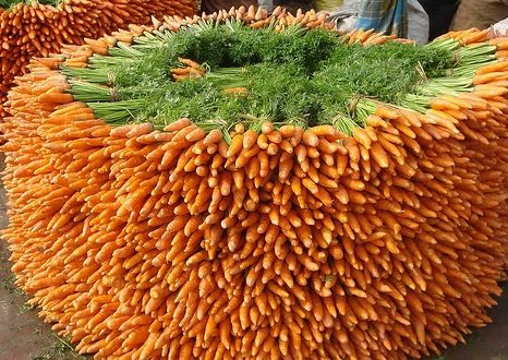 Carrot Cultivation Guide.