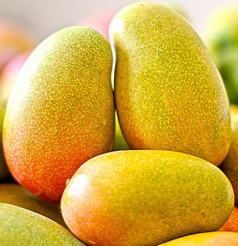 Mango Farming Information Guide Asia Farming