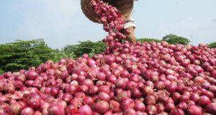 Onion Farming.