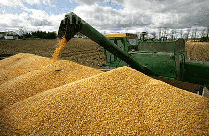 Separating Maize Seeds by Machine