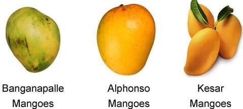 Indian Mango Varieties | Asia Farming