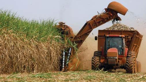 Harvesting Sugarcane with Machine