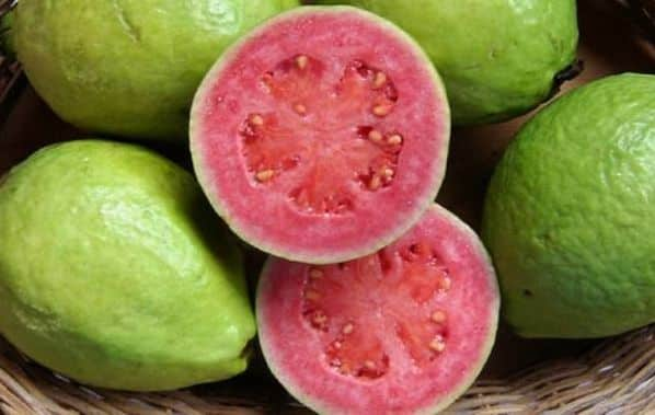 Red Guava Variety.