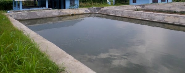 Tilapia fish farming information guide for Pond construction for fish farming