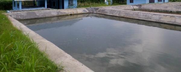 Tilapia fish farming information guide for Garden pond management