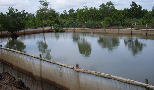 Tilapia fish farming information guide for Cheap pond fish
