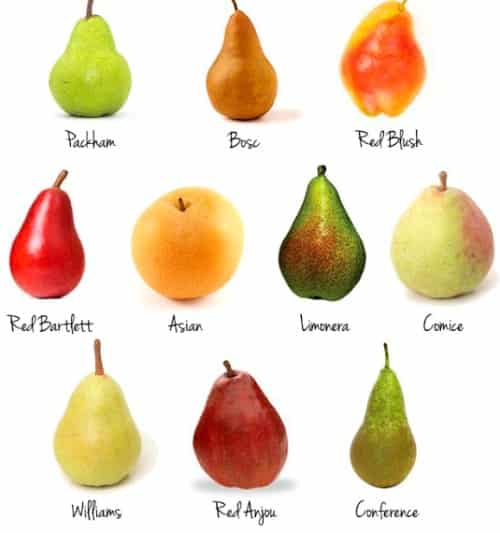 Some Pear Varieties.