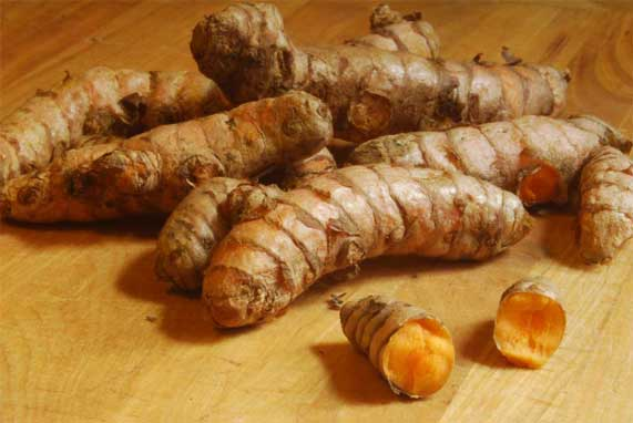 Turmeric Rhizomes (Roots).