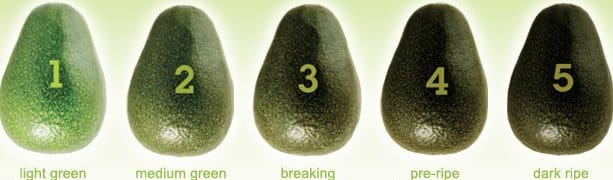 Avocado Ripe Stages.