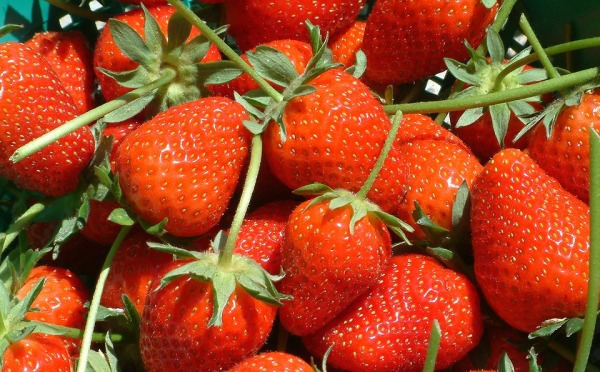 Harvested Strawberry Fruits.