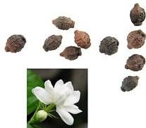 Jasmine Plant Seeds.