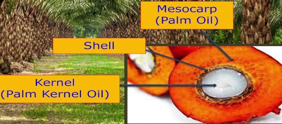 Palm Oil Source.