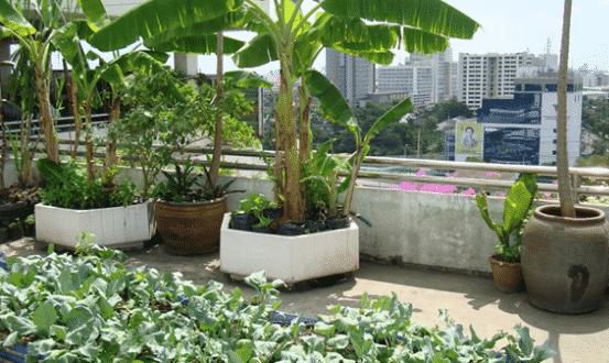 Terrace Garden Planting, Ideas and Tips | Asia Farming