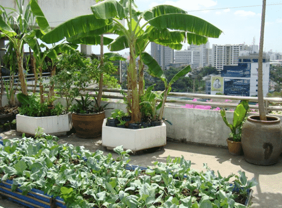 Terrace Garden Planting Ideas And Tips Asia Farming