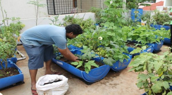 Terrace Gardening (Pic Source - Biological Research Innovation Centre And Solutions).