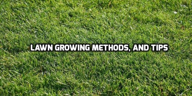 Lawn Growing.
