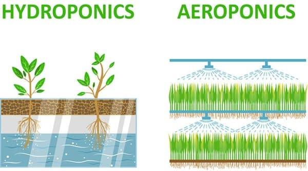 Hydroponics Vs Aeroponics.