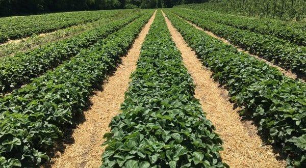 Organic Farming Business Plan.