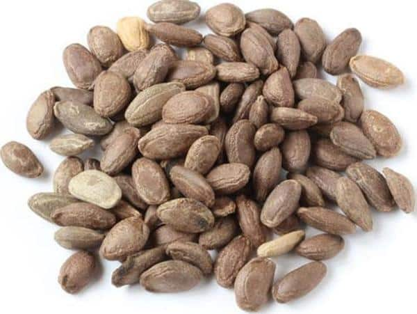 Snake Gourd Seeds.