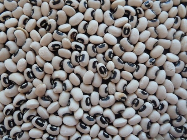 Cowpea Seeds.