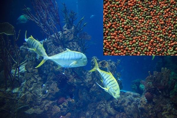 Aquarium Fish Food.
