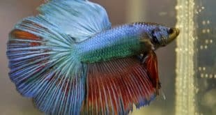 Betta Fish Food.