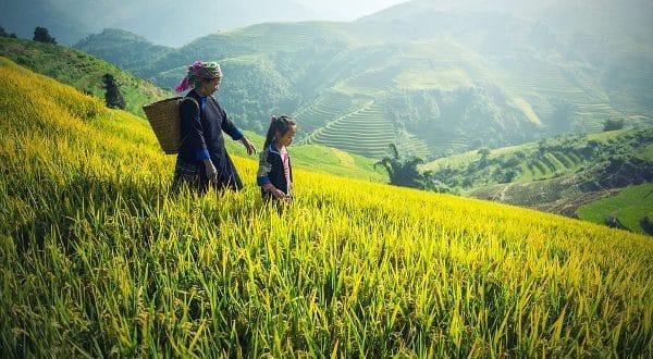 Rice Production in Myanmar.