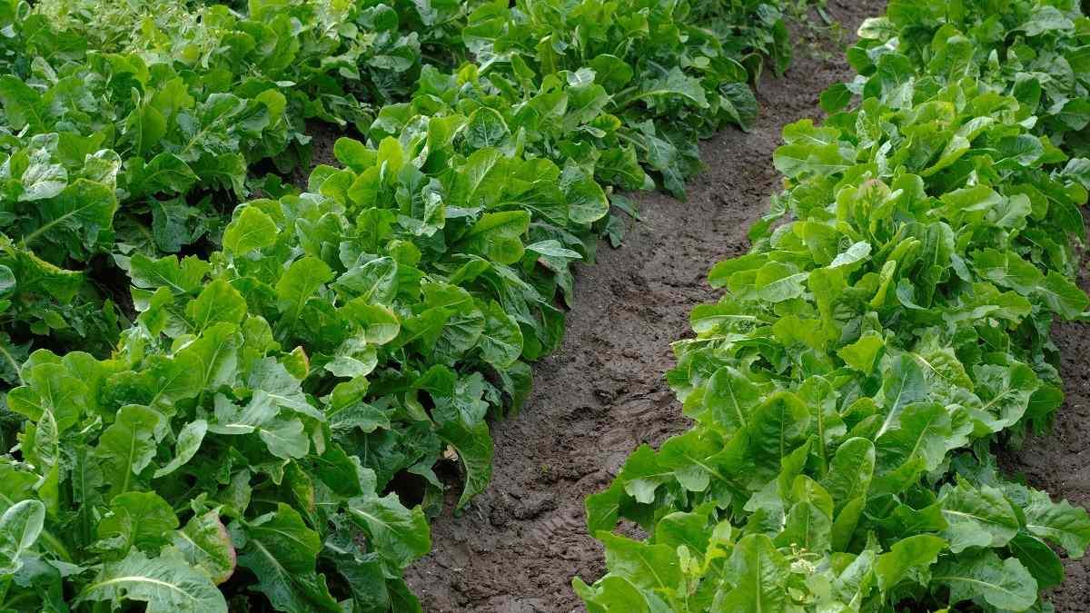 Soil Management in Organic Farming.